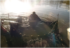 netting a carp lake